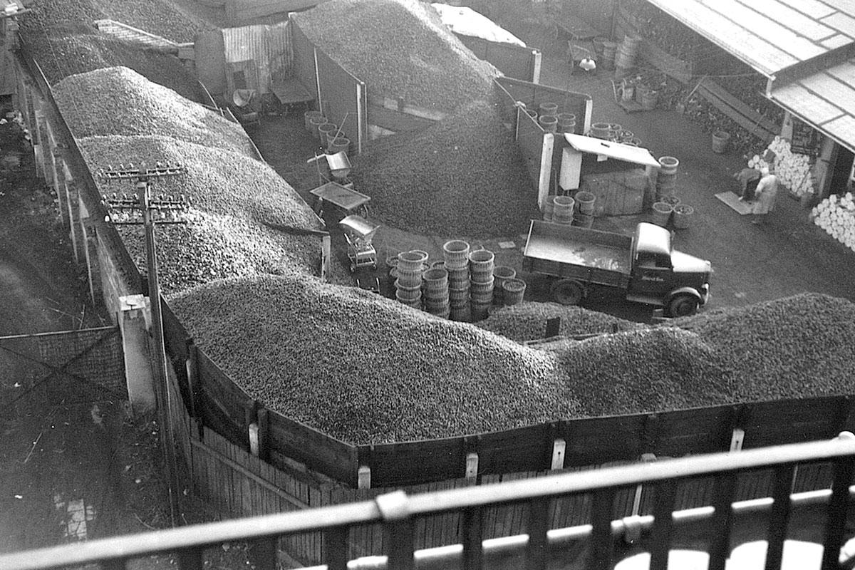 Beer Energien Kohlehalden werden immer höher